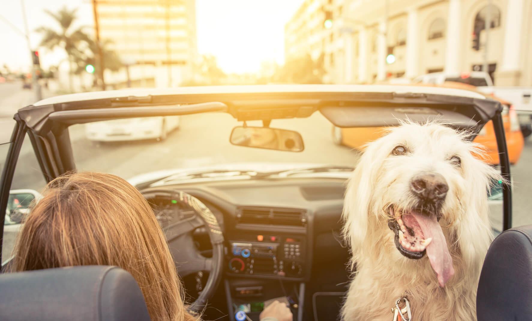 Haushaltstipps: schlechte Gerüche aus dem Auto entfernen